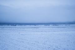 雪虫が飛ぶと、まもなく雪が降る。1週間後のこともあれば、もっと先のこともある。 ・・・秋冬編おしまい。
